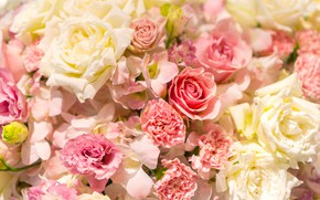 Picture flowers, background, roses, gentle, pink, white, a lot