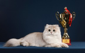 Picture cat, cat, look, pose, background, muzzle, award, lies, Cup, Studio, winner