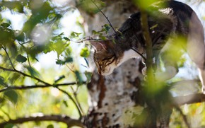 Picture cat, look, branches, pose, kitty, tree, foliage