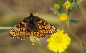 Picture nature, background, butterfly, antennae, spots