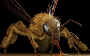 Picture OSA, art, Eric Keller, Apis mellifera (honey bee)