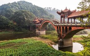 Picture Bridge, Trees, River