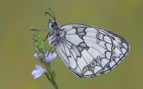 Picture background, butterfly, flowers, a blade of grass