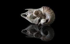 Picture background, skull, horns