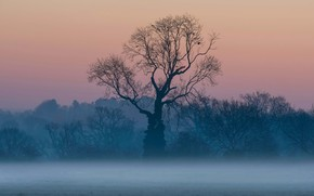 Picture fog, tree, England, Surrey