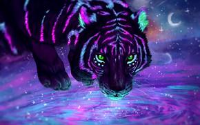 Picture look, stars, light, night, tiger, beauty, predator, a month, neon, light, moon, drink, tiger, night, …