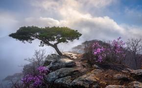 Picture clouds, landscape, nature, stones, tree, rocks, the bushes, South Korea, reserve
