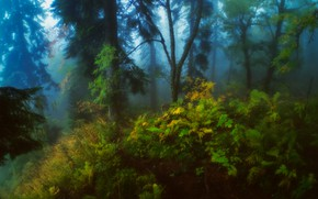 Picture forest, trees, nature, fog, thickets, Alexander Plekhanov