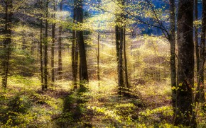 Picture autumn, forest, light, trees, branches, thickets, trunks, foliage, yellow leaves, birch, grove