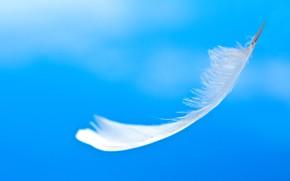 Picture the sky, pen, bird