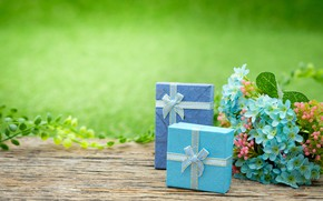 Picture flowers, gift, Holiday