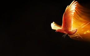 Picture Minimalism, Bird, Fire, Wings, Background, Fantasy, Mythology, Art, Fiction, Phoenix, Firebird, Phoenix, Illustration, Concept Art, …