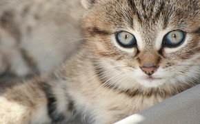 Picture cat, look, muzzle, kitty, cat