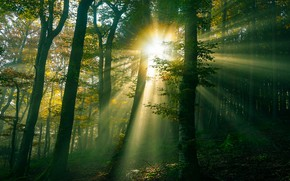 Picture forest, the sun, rays, light