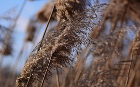 Picture winter, grass, the wind, bokeh