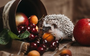 Picture needles, cherry, background, apples, fabric, pot, animal, hedgehog, fruit, still life, face, ears, cherry, hedgehog, …