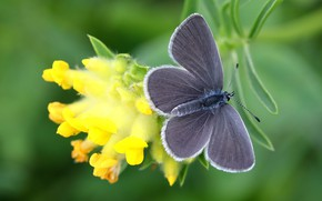 Picture macro, flowers, green, background, butterfly, plant, yellow, insect, grey, wings