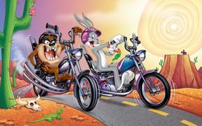 Picture Rabbit, Motorcycle, Cartoon, Taz, The Tasmanian devil, Looney Tunes, Bugs Bunny, Bugs Bunny, Tasmanian Devil, ...
