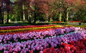 Picture trees, flowers, Park, bright, beauty, spring, yellow, garden, tulips, red, pink, buds, flowerbed, a lot, …