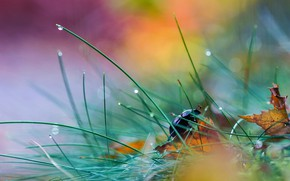 Picture leaves, bokeh, beetle, Rosa, grass