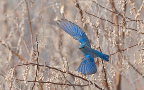Picture flight, branches, bird, wings, spring, flies, blue, the scope, bird