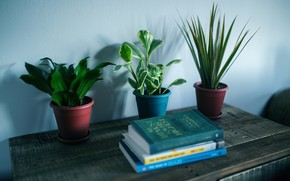 Picture table, plants, books