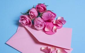 Picture flowers, roses, petals, pink, pink, flowers, beautiful, romantic, the envelope, petals, roses