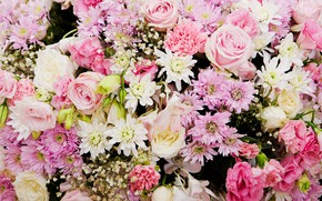 Picture flowers, background, roses, pink, buds, chrysanthemum, pink, flowers, roses, bud