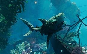 Picture algae, fish, shark, under water, Maneater
