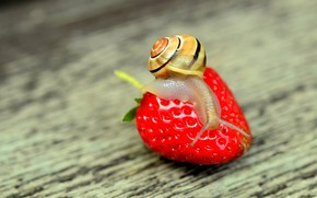 Picture macro, nature, snail, strawberry, nature, strawberry
