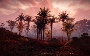 Picture landscape, sunset, palm trees, postapokalipsis, Playstation 4, Guerrilla Games, Horizon Zero Dawn
