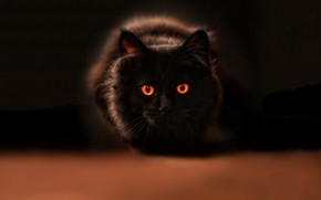 Picture cat, eyes, look