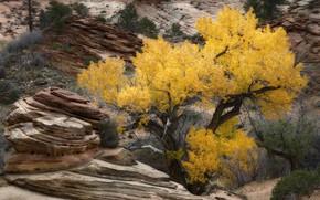 Picture autumn, leaves, rocks, Utah, USA, Zion national Park