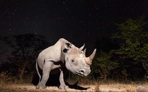 Picture night, nature, Rhino
