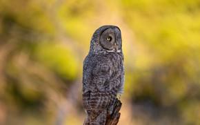 Picture autumn, owl, bird, yellow background, bokeh, owl, motley
