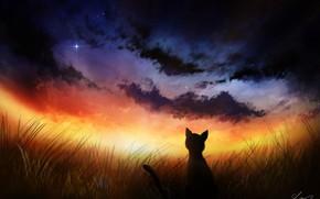 Picture cat, night, nature