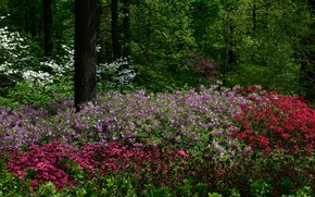 Picture trees, flowers, Park, New York, USA, the bushes, alstremeria, Botanical Garden