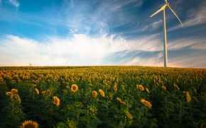 Picture field, summer, clouds, light, sunflowers, flowers, nature, windmill, yellow, horizon, a lot, sunflower, plantation, blue …