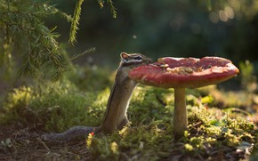 Picture forest, branches, mushroom, moss, mushroom, Chipmunk, rodent, pet