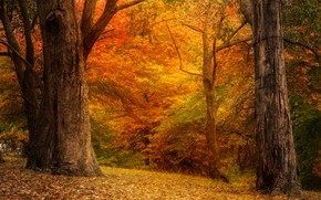 Picture autumn, forest, trees, branches, Park, trunks, foliage, the colors of autumn, Golden autumn