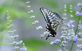 Picture macro, flowers, butterfly, lilac, swallowtail
