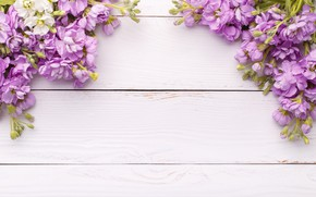 Picture flowers, wood, flowers, spring, violet