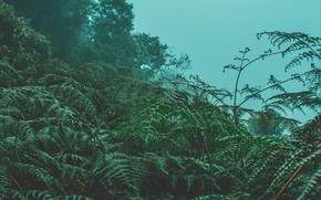 Picture trees, nature, fog, fern