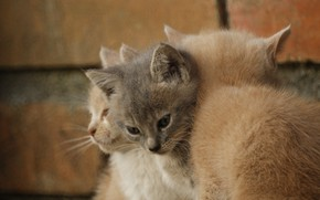 Picture pussies, funny, three kittens