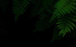 Picture foliage, green, black background, the dark background