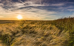 Picture field, summer, sunset, nature
