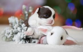 Picture toy, baby, puppy, doggie, Svetlana Pisareva
