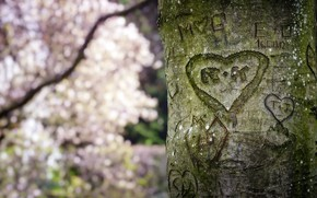 Picture tree, heart, spring, trunk