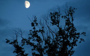 Picture the sky, clouds, nature, tree, the moon, twilight