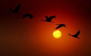 Picture The sun, sun, cranes, cranes, ido meirovich